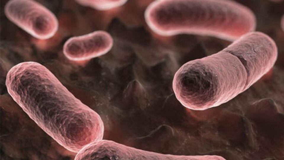 Yersinia_pestis-ot4jb0zishorka5no5n94vybivkxj2eymsvvxyg1k8.jpg